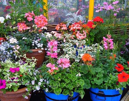 Flowering Pot Plants, Plant Display, Pot