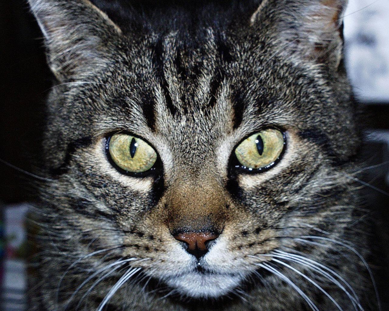 снимке картинки голова кошек новый
