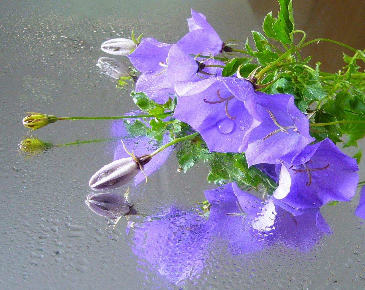 Открытка отражение