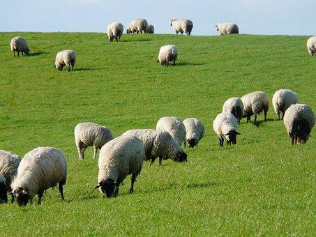 Troupeau de moutons images gratuites sur pixabay 3 - Photos de moutons gratuites ...