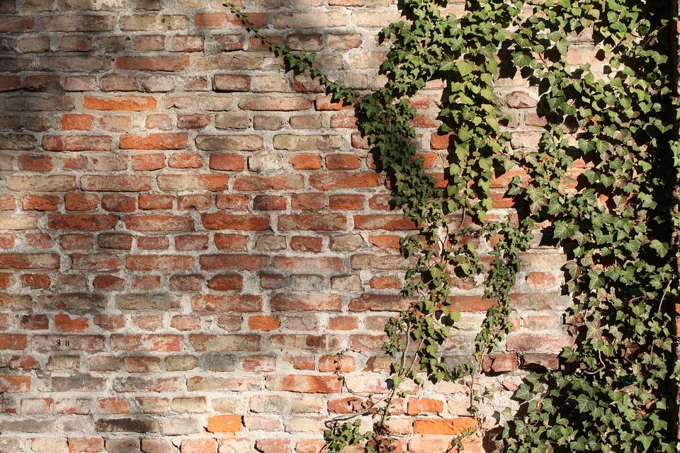 Mur De Briques, Briques, Mur, Wall, Ivy