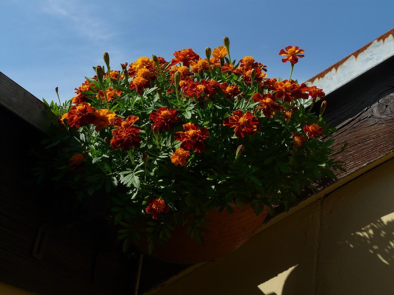 Картинки : цвести, лист, цветение, оранжевый, красный, красо.