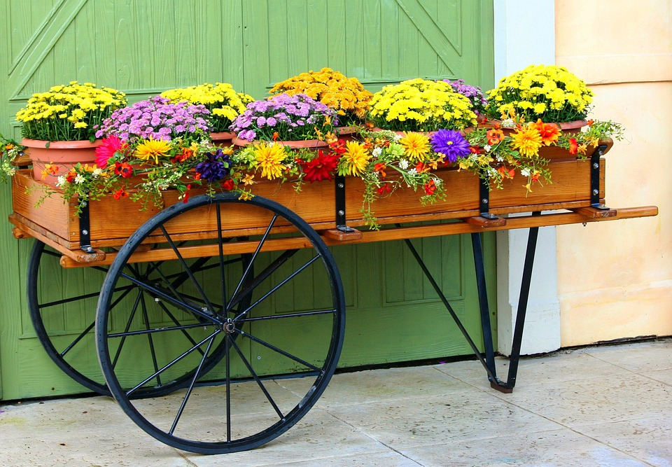 Attrayant Flower Cart Wagon Mums Chrysanthemums Floral