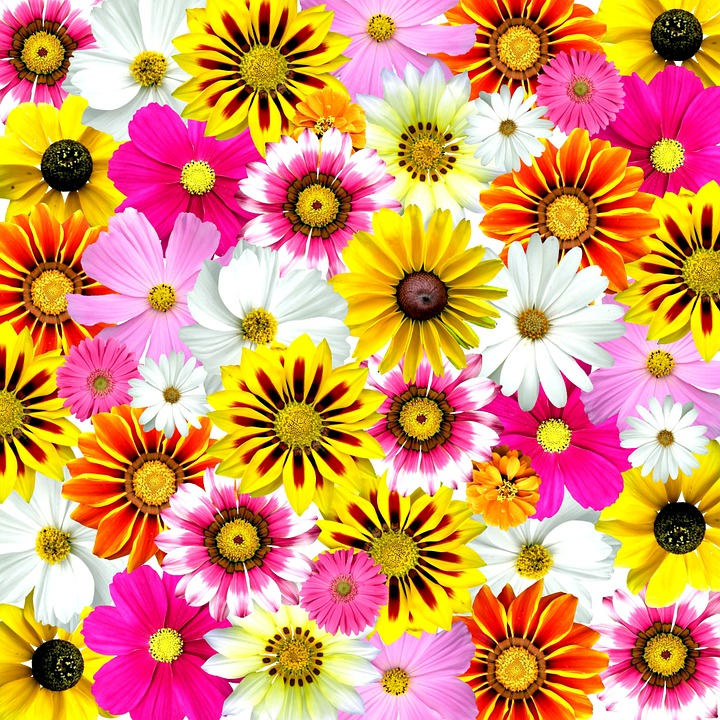 Free Colorful Flower Wallpaper Downloads: Flowers Colorful Summer · Free Photo On Pixabay