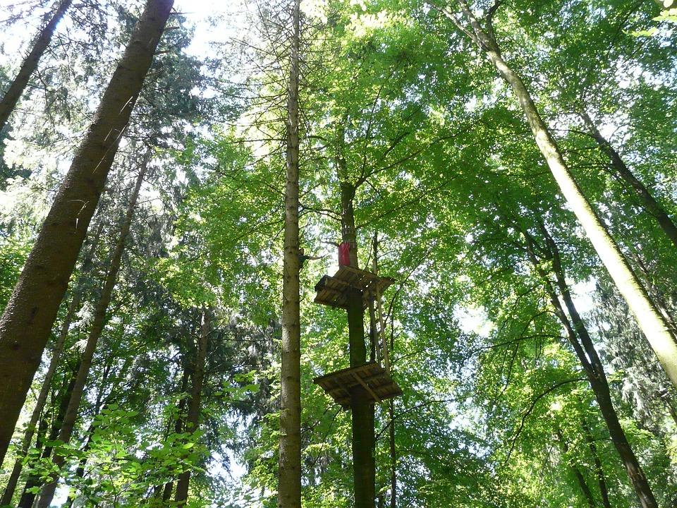 cedar forest-princess Mononoke