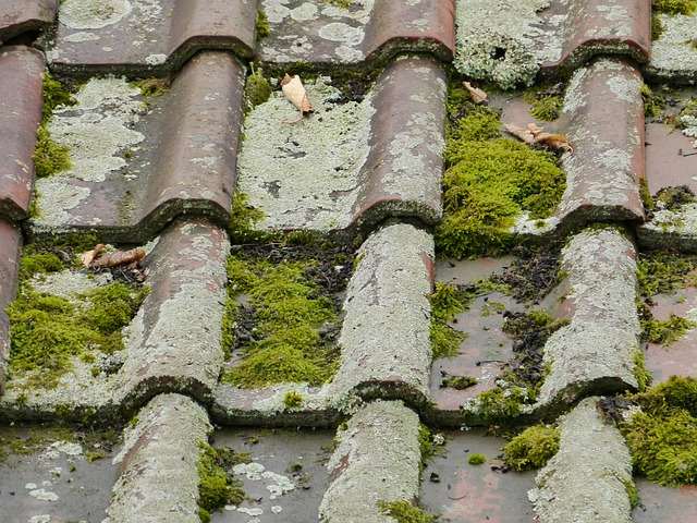 Free Photo: Roof, Roofing Tiles, Old, Moss   Free Image On Pixabay   58965