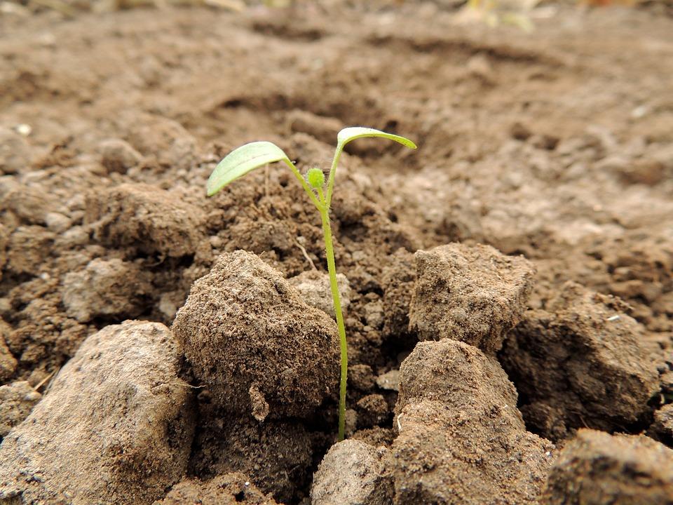Germe, Planta, Alimentos, Sementes, Crescer, Verde
