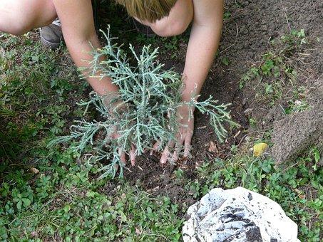 Gärtnerin Gartenarbeit Garten Baum Einpfla