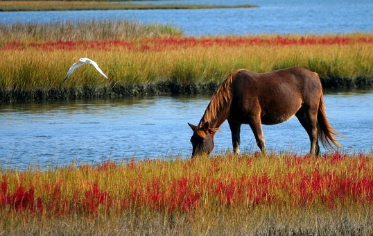 Horse Wild Horse Marsh Pony Swamp Grazing