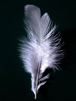 Feather, Plumage, Wing, Fly, White, Down