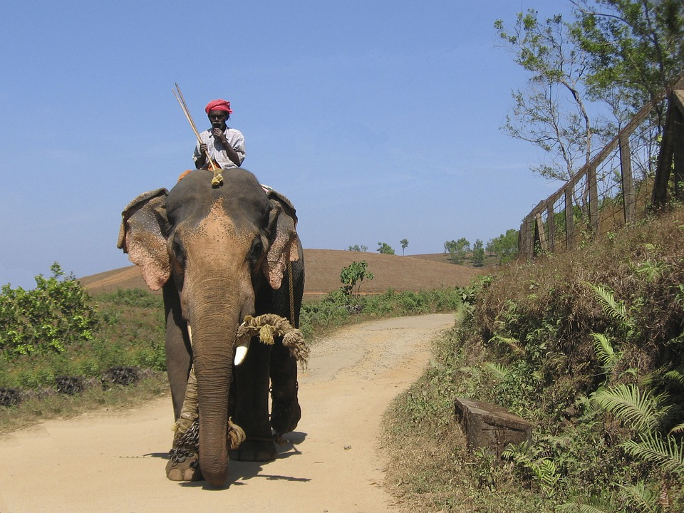 L phant l 39 inde aanayum paappanum photo gratuite sur pixabay - Photos d elephants gratuites ...