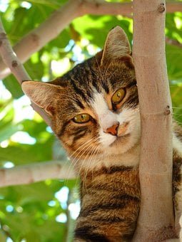 Cat, Sweet, Climb, Tree, Animal, Dear