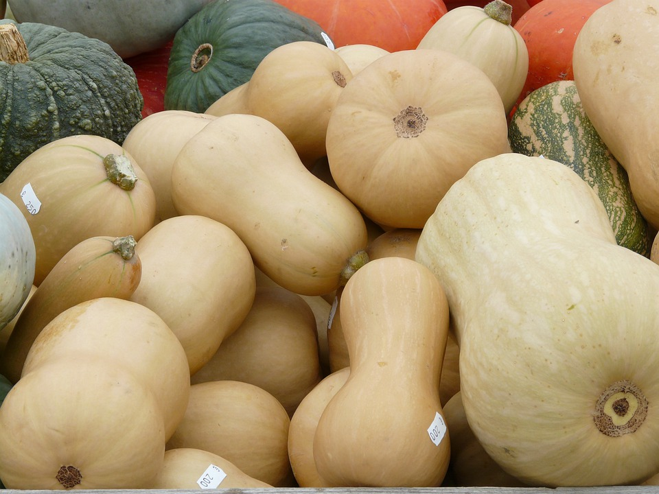 Musky Winter Squashes, Cucurbita Moschata, Pear Pumpkin