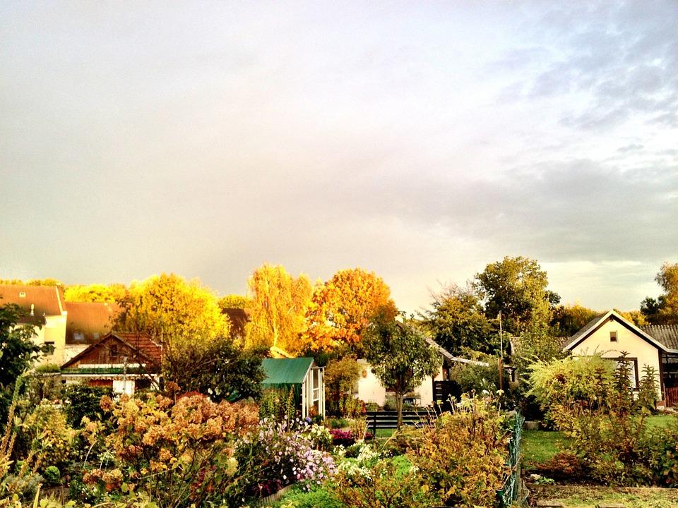 Jesień, Ogród, Natura, Przydział, Złota, Światło