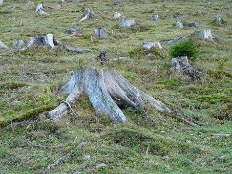 Deforestation, Forest, Tree Stump