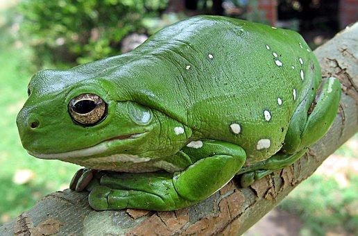 Elegant Finger Coral Tree Frog Running Frog Frog A