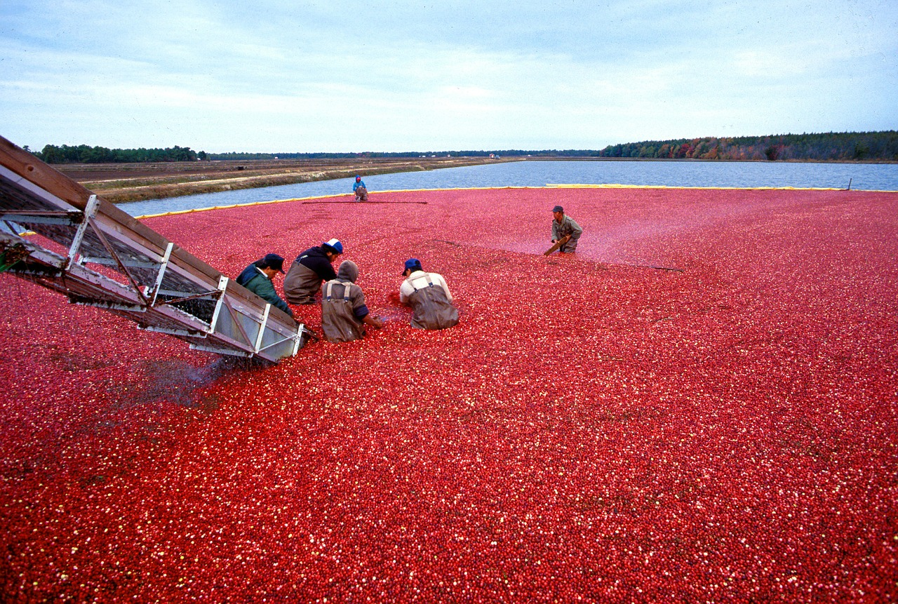 national cranberry cooperative Case report: national cranberry cooperative fill in your name in the header please read the assignment collaboration guidelines in course syllabus: collaboration between groups is not allowed.