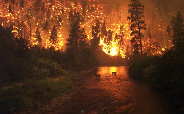 Free Photo Forest Fire Brand Fire Free Image On