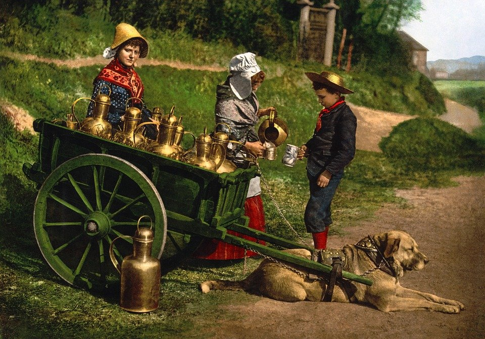 Milk, Cart, Photochrom, 1890, Dog, Peddler