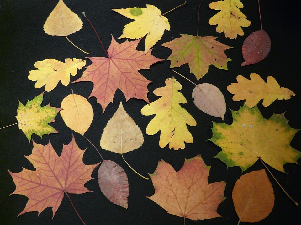 Blätter Pressen herbstblätter gepresst basteln kostenloses foto auf pixabay