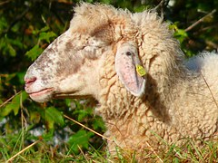 Free photo yarn wool cords colorful green free for Schafe halten im garten
