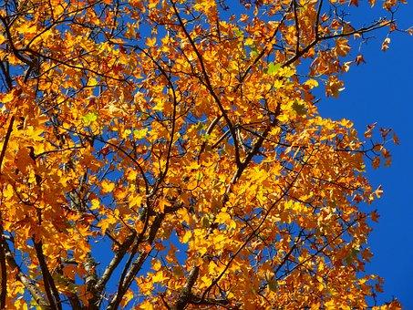 Herbst, Bunt, Baum, Blätter, Gelb