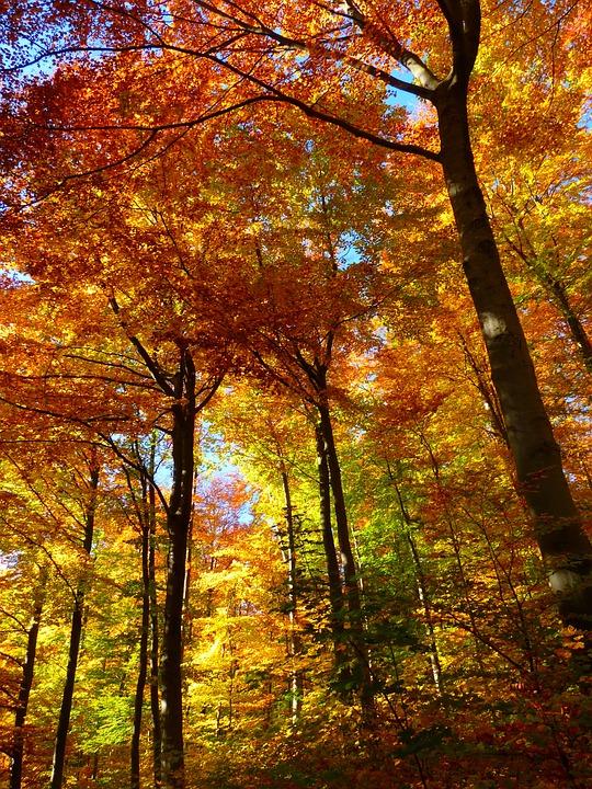 Citate Fotografie Free : Las jesienny kolorowy · darmowe zdjęcie na pixabay