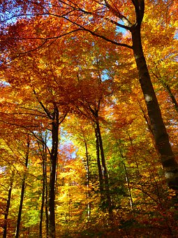 Forest, Autumn Forest, Colorful, Trees