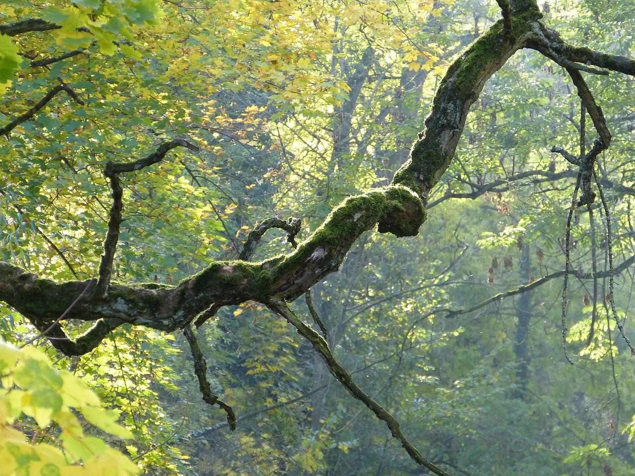 извилистое дерево фото пользователи поверили