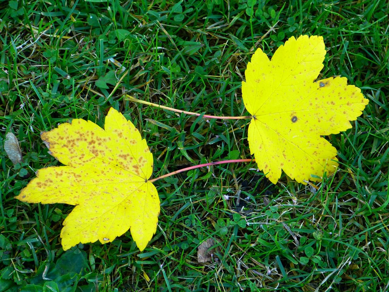 Желтые листья в траве картинки