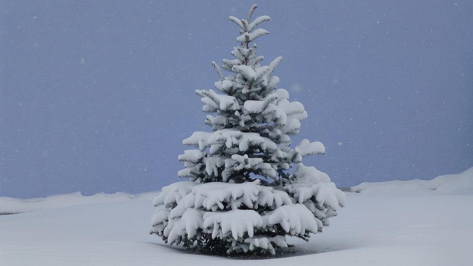 k lteeinbruch tannenbaum allg u kostenloses foto auf pixabay. Black Bedroom Furniture Sets. Home Design Ideas