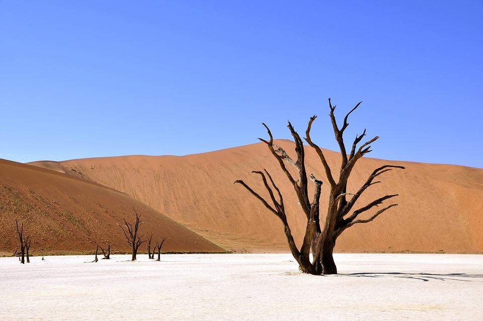 Árbol, Desierto, Namibia, Arcilla Pan, La Sequía