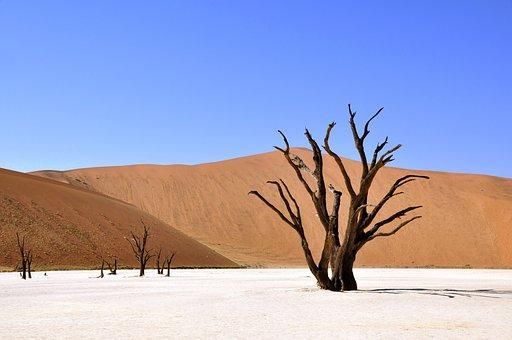 Tree, Desert, Namibia, Clay Pan, Drought