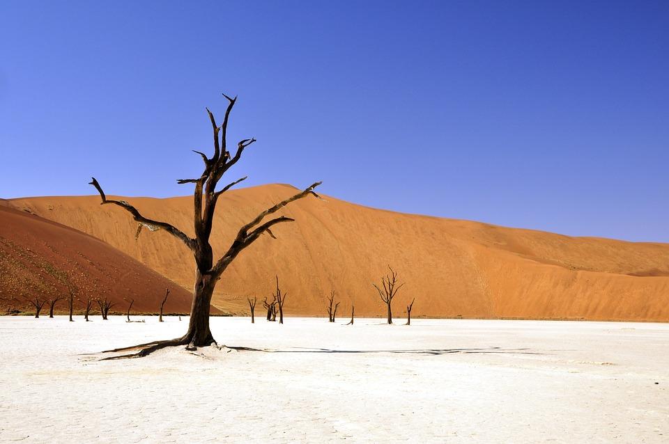 Drzewo, Pustynia, Namibia, Dead Vlei, Deadvlei