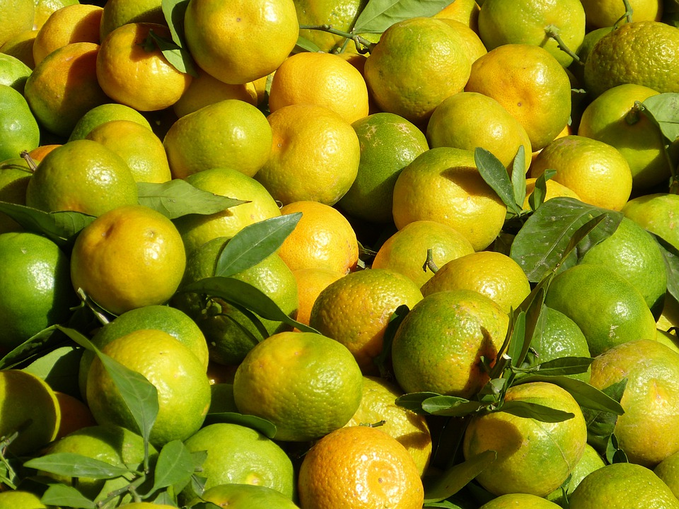 jeruk keprok buah sehat gizi