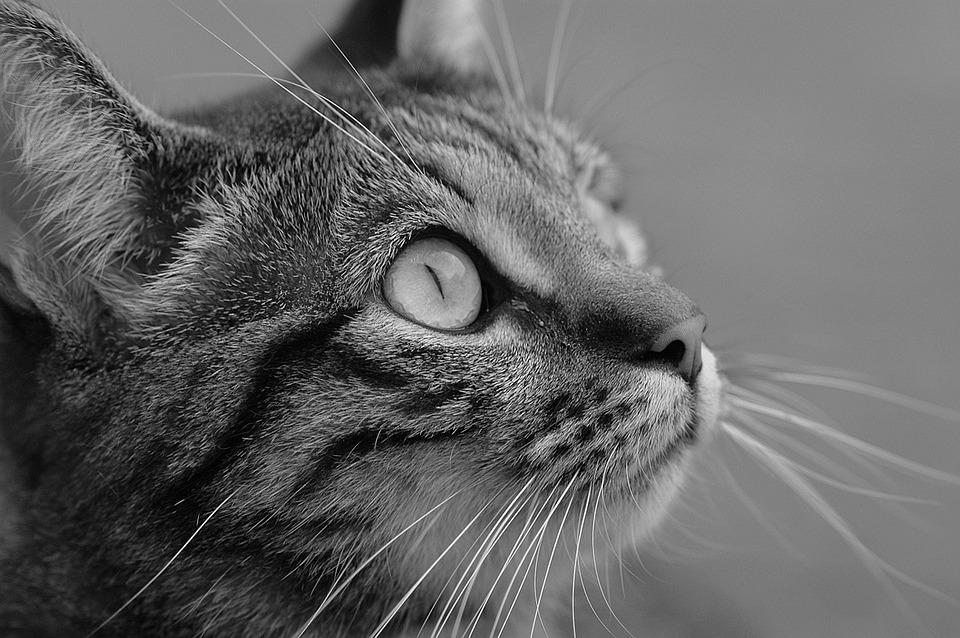 zwart-wit poesje Fotos