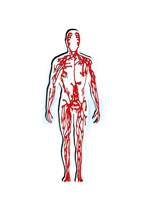 Human Blood Veins Free Image On Pixabay