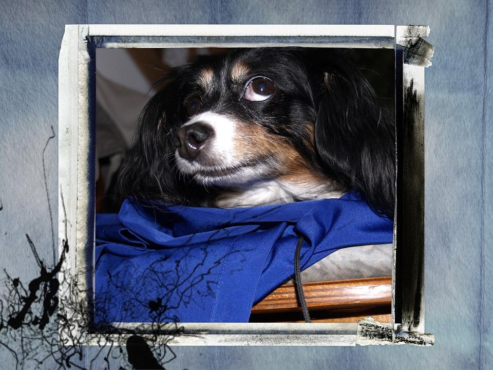 Klein Hund Rahmen · Kostenloses Foto auf Pixabay