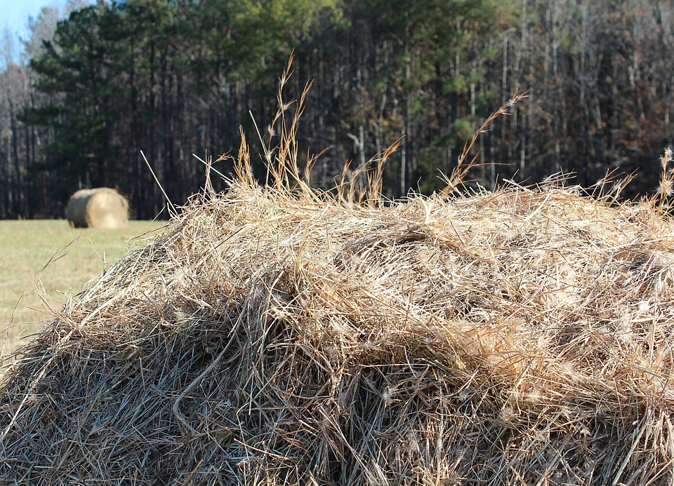 Hay Pile Fodder Dried ...