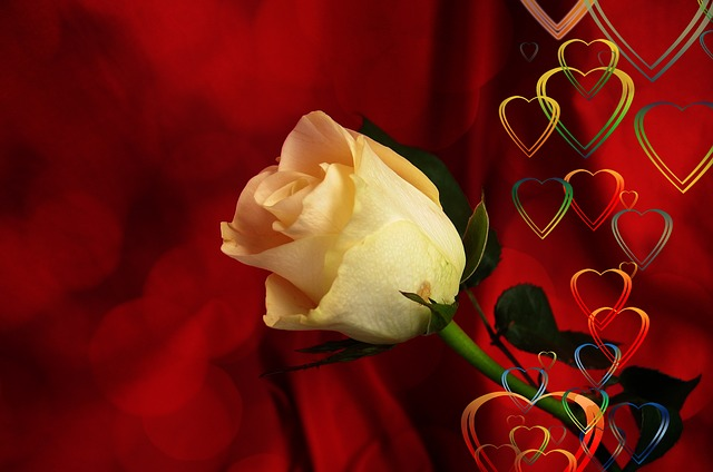free photo  rose  heart  love  luck  abstract