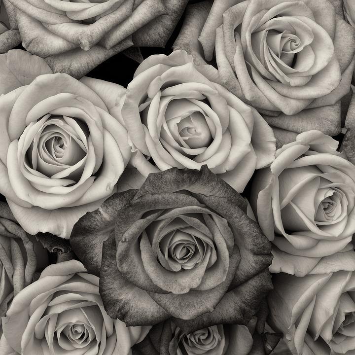 Rosen Blume Liebe · Kostenloses Foto auf Pixabay
