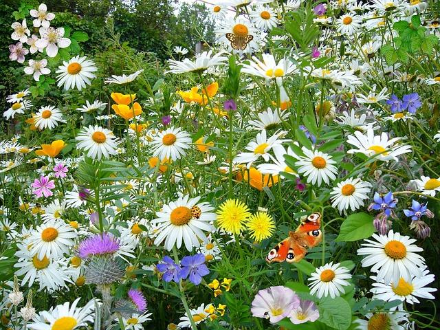Фото красивое полевых цветов