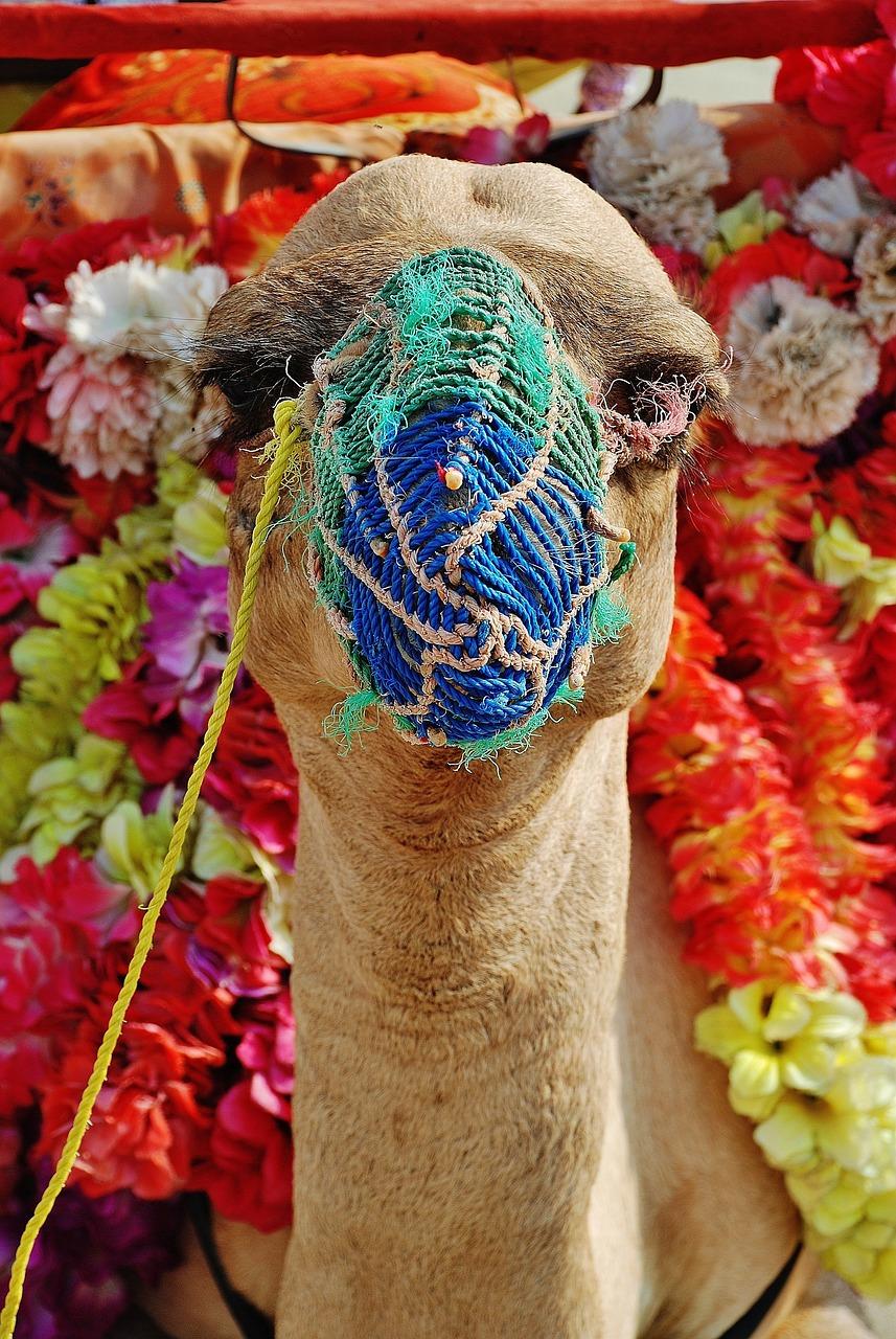 картинка с лицом человека из животных где верблюд чтоб исполнились все