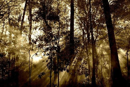 Forestales, Sol, Rayos, Niebla
