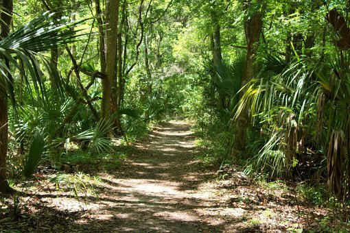 Florida, Forest, Nature, Trees, Plant