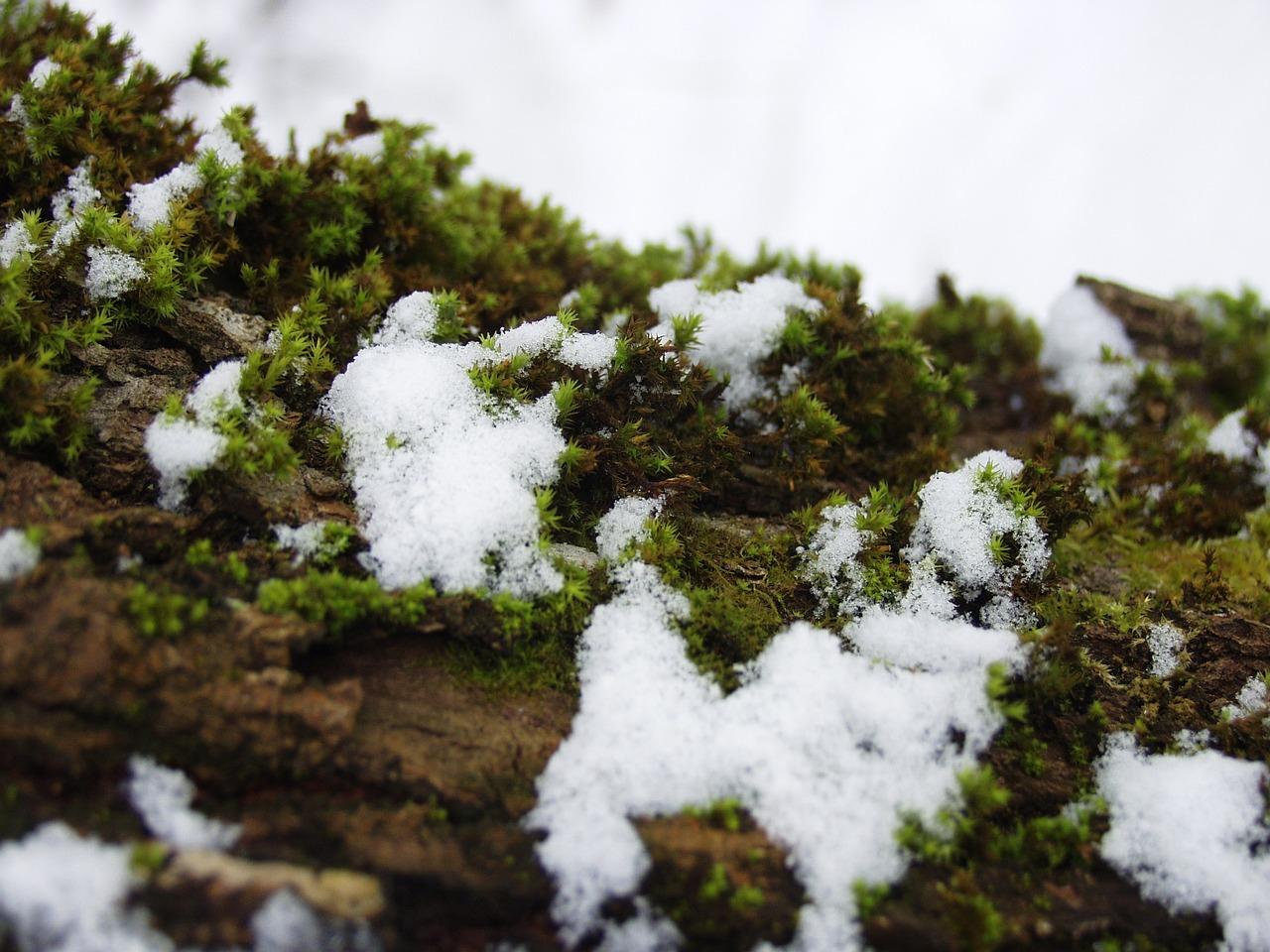 Картинка мох на севере