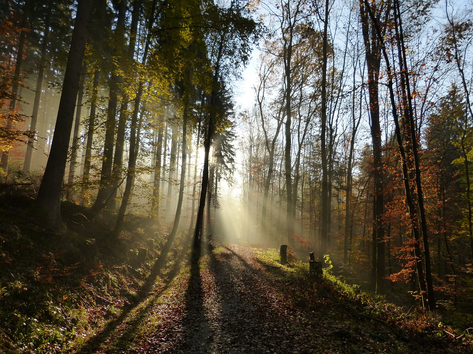 Forest Light Shadow 183 Free Photo On Pixabay