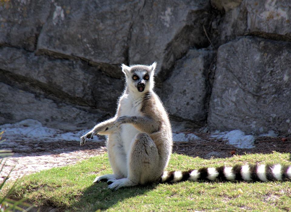 Photo gratuite l murien des animaux l muriens image gratuite sur pixabay 68668 - Image animaux gratuite ...