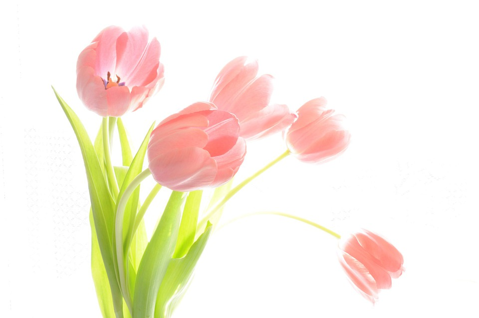 Karangan Bunga Tulip Tanaman Foto Gratis Di Pixabay