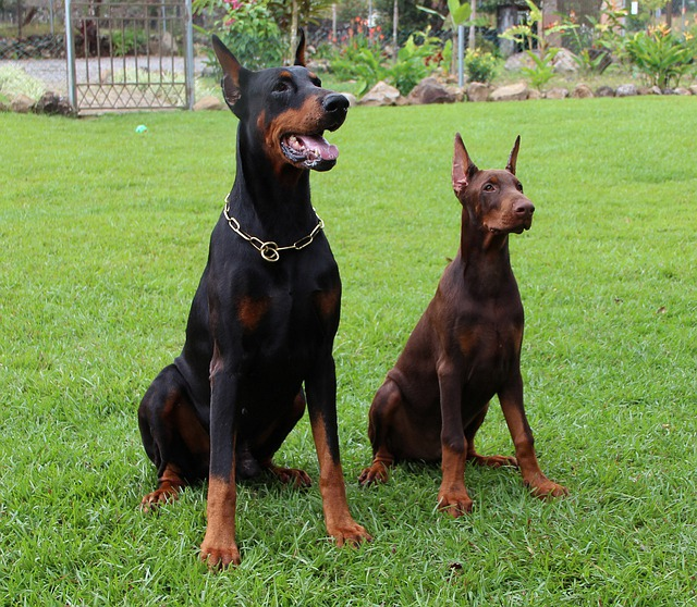 Victory Dog Training